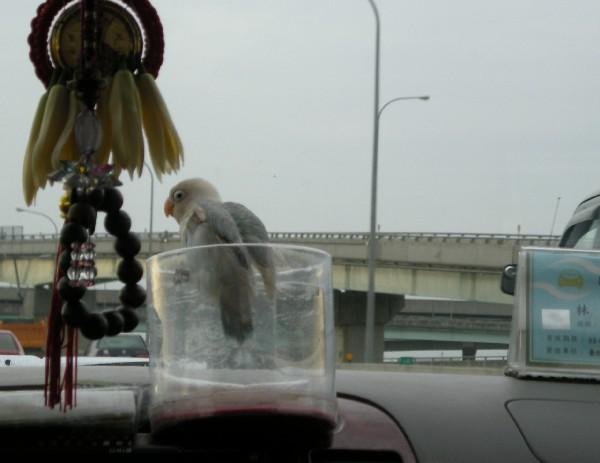 taxibird.jpg