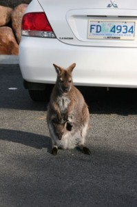 roo_parking