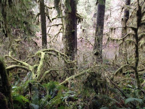 fall_creek_hike